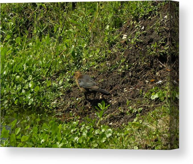 Bird Canvas Print featuring the photograph Down By The River by Cynthia N Couch