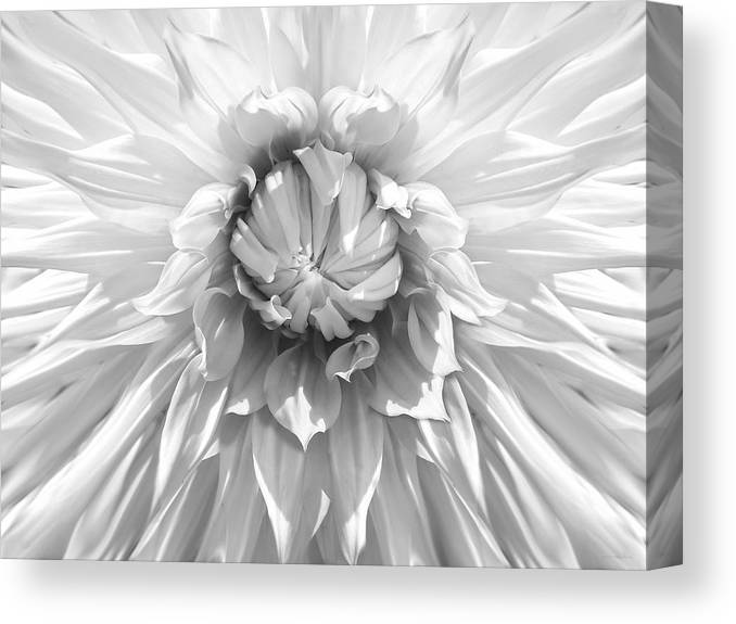 Dahlia Canvas Print featuring the photograph Dramatic White Dahlia Flower Monochrome by Jennie Marie Schell