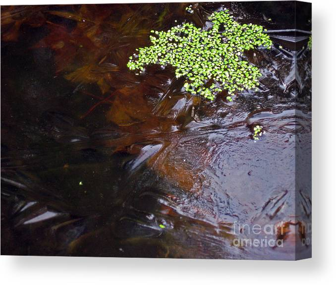 Duck-weed Canvas Print featuring the photograph Duck Weed And Ice by Ellen Miffitt