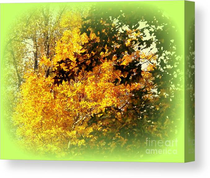 Fall Canvas Print featuring the photograph Fall Colors by John Potts