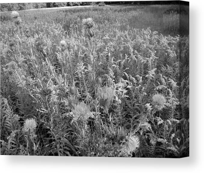 Nature Canvas Print featuring the photograph Flowered Field by Joel Zimmerman