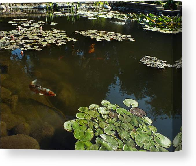Koi Canvas Print featuring the photograph Flying Though The Pond by Caryl J Bohn