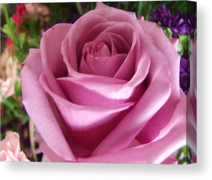 Pink Rose Canvas Print featuring the photograph For You Mom by Dave Dresser