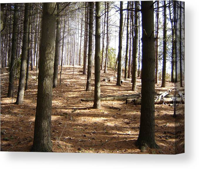 Landscape Canvas Print featuring the photograph Forest And Trees by Gaetano Salerno