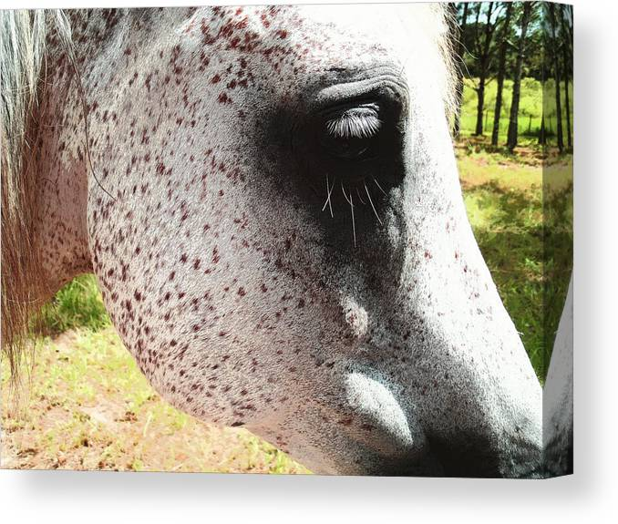 Freckle Canvas Print featuring the photograph Freckle Face by Ginny Schmidt