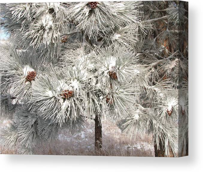 Snow Canvas Print featuring the photograph Frosty Pinetree by Steven Parker