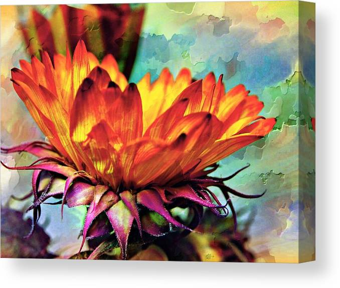 Flower Canvas Print featuring the photograph Gerbera Patchwork by Emily Sparks