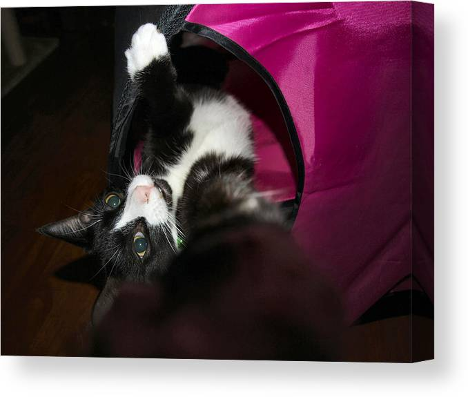 Reach Cat Streatch Wonder Black White Canvas Print featuring the photograph Hello by Crystal