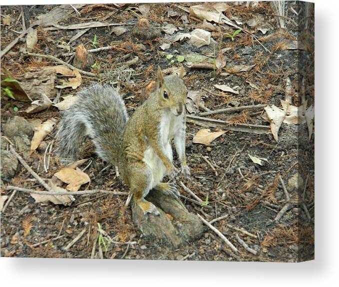 Florida Canvas Print featuring the photograph Hello by Terry Baker