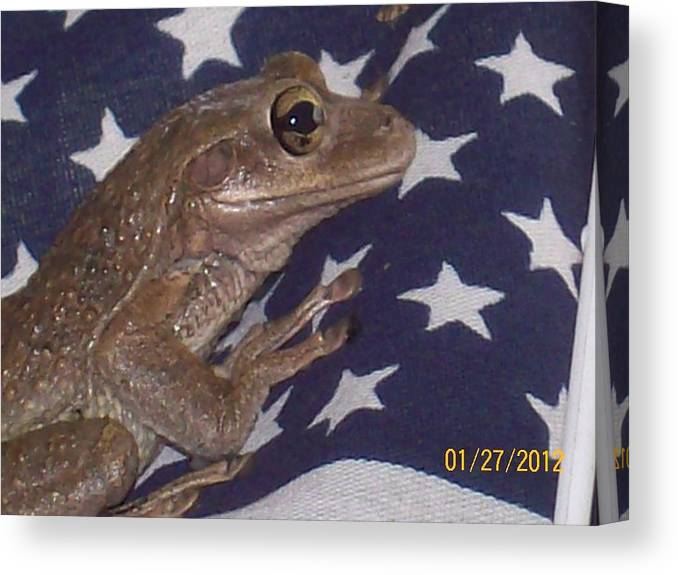 Frog Caught Resting On An American Flag. Canvas Print featuring the photograph I'm Seeing Stars by Belinda Lee