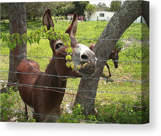 Horse Canvas Print featuring the photograph Just Hangin Out by Ginny Schmidt