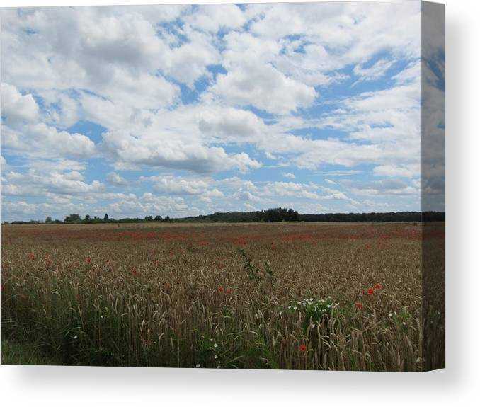 Poppy Canvas Print featuring the photograph Last Of The Poppies by Pema Hou