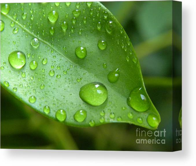 Macro Digital Photography Canvas Print featuring the photograph Live Lightly On The Earth by Laura Yamada