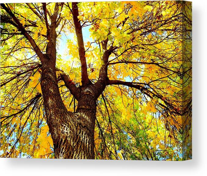 Landscape Canvas Print featuring the photograph Looking Up by Susie Loechler