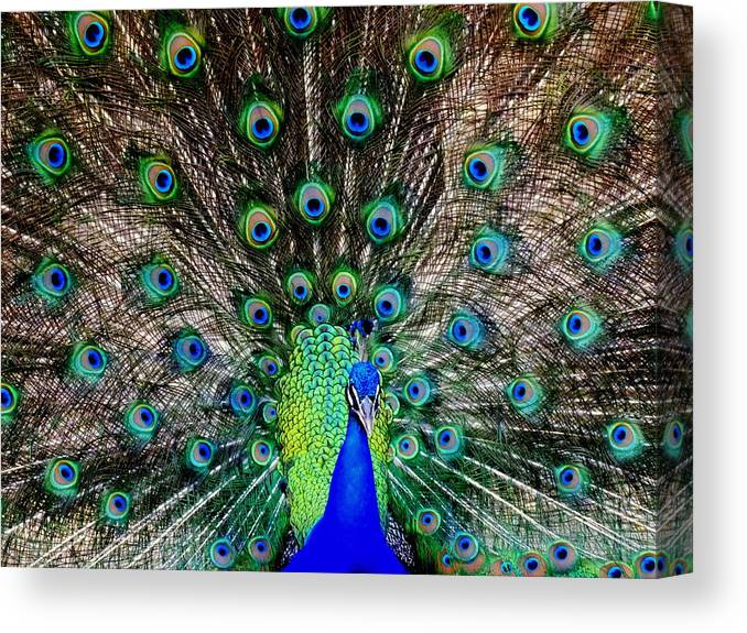 Peacocks Canvas Print featuring the photograph Majestic Blue by Karen Wiles