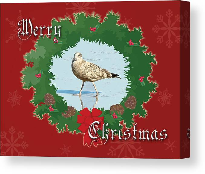 Christmas Canvas Print featuring the photograph Merry Christmas Greeting Card - Young Seagull by Mother Nature