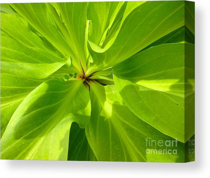 Monument Plant Canvas Print featuring the photograph Monument Purple Heart by Kathryn Barry