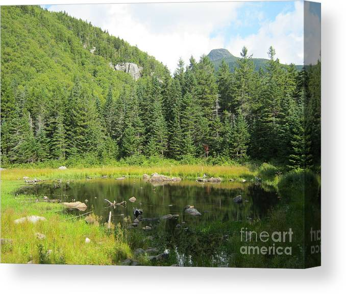 Landscape Canvas Print featuring the photograph Mountain Marsh by Ara Wilnas