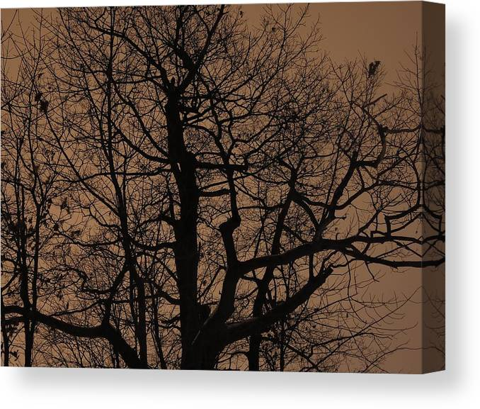Oak Canvas Print featuring the photograph Oak Silhouette by Tim Beebe