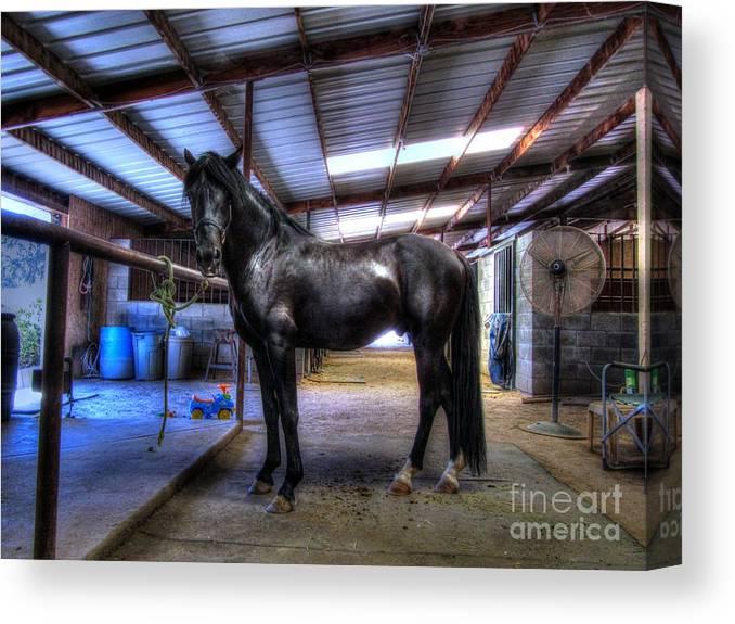 Horse Canvas Print featuring the digital art Pavon's Peace by Janna Davis