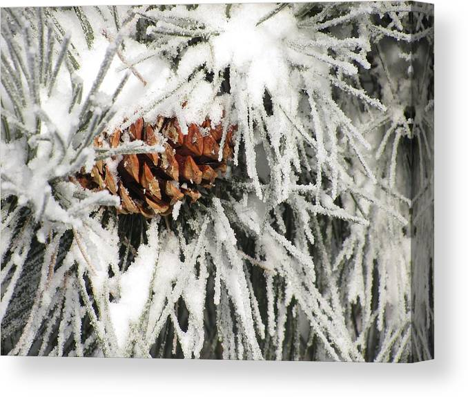 Snow Canvas Print featuring the photograph Pinecone In Snow by Steven Parker