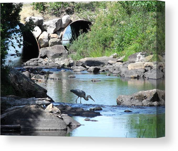 Heron Canvas Print featuring the photograph Poised by Jane Munroe