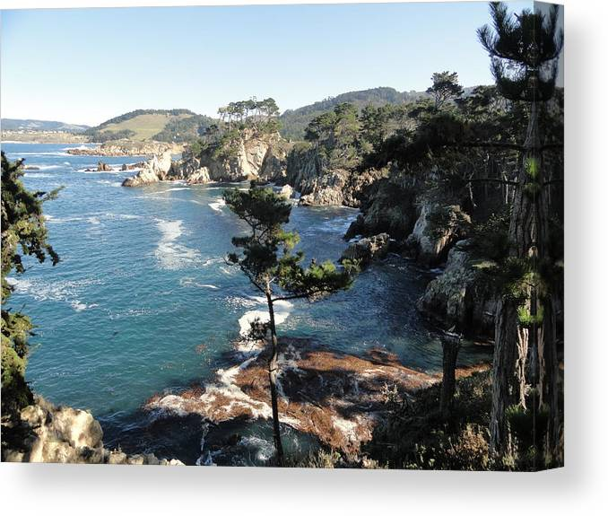 Point Lobos Canvas Print featuring the photograph Pont Lobos Cove by Shannon Grissom