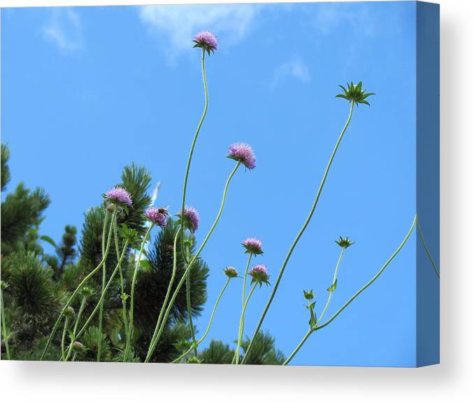 Flower Canvas Print featuring the photograph Reaching by Sarah Moody