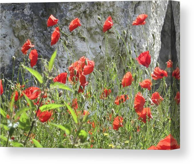 Poppy Canvas Print featuring the photograph Red Poppies by Charles Good