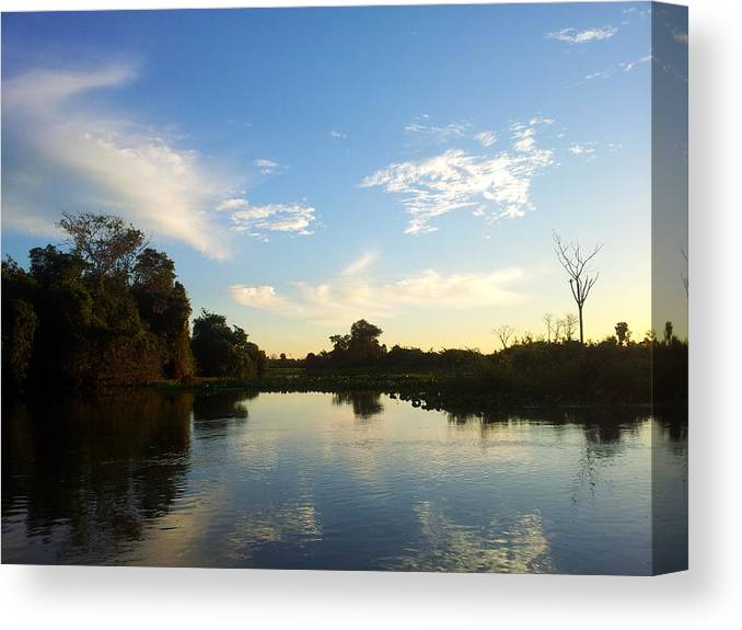 Pantanal Canvas Print featuring the photograph River And Pantanal by Marina T P Levy