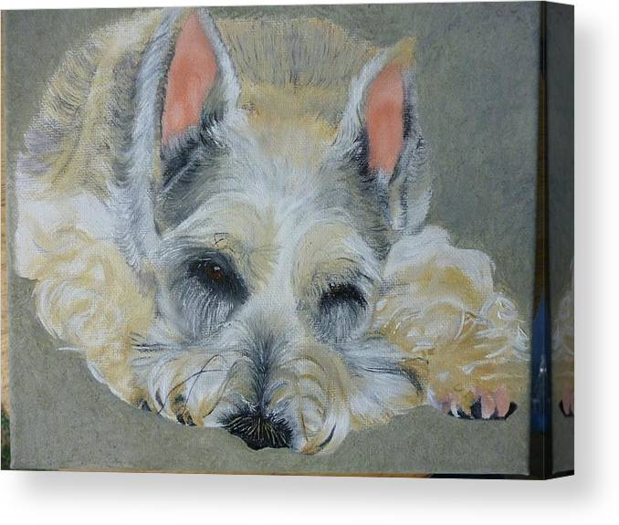 Schnauzer Canvas Print featuring the painting Schnauzer Pet Portrait Original Oil Painting 8x10 Inches Made To Order by Shannon Ivins