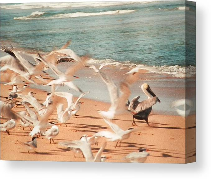 Birds In Flight On Miami Beach Canvas Print featuring the photograph Seagulls In Flight by Belinda Lee