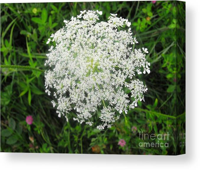 White Flowers Canvas Print featuring the photograph Snowflake Flower by Lisa Gifford