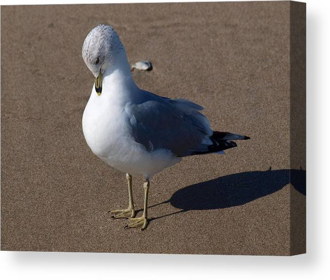 Birds Canvas Print featuring the photograph Sound Asleep by Jeffrey Akerson