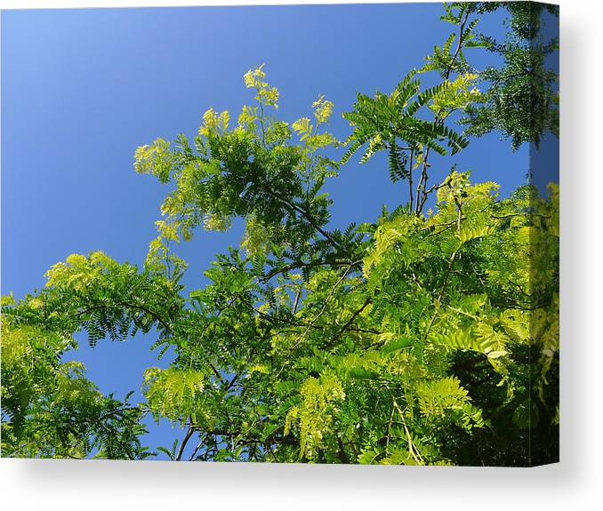 Spring Green Canvas Print featuring the photograph Spring Green by Denise Mazzocco