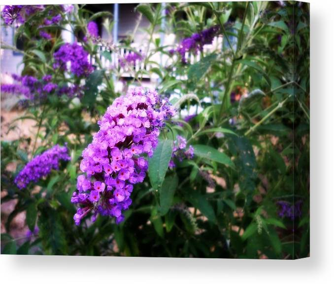 Purple Canvas Print featuring the photograph Touched By Unnoticed Beauty by Cassandra Van Hout