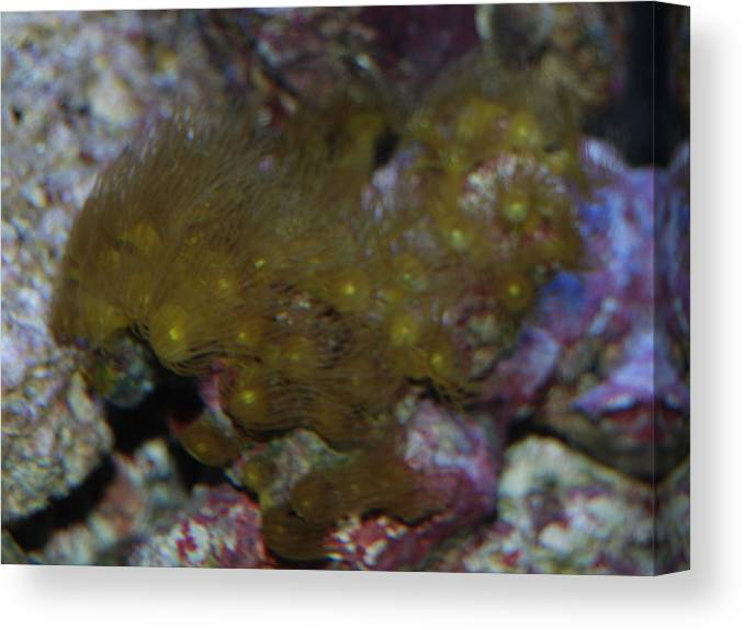 Shot Through Side Of Aquarium Canvas Print featuring the photograph Tropica Fish by Robert Floyd