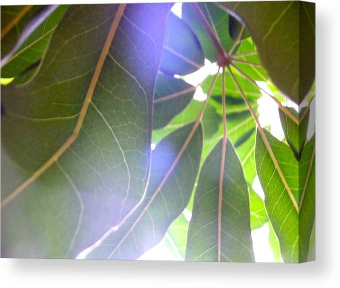 Kevin Hogan Canvas Print featuring the photograph Tropical Shade by Kevin Hogan