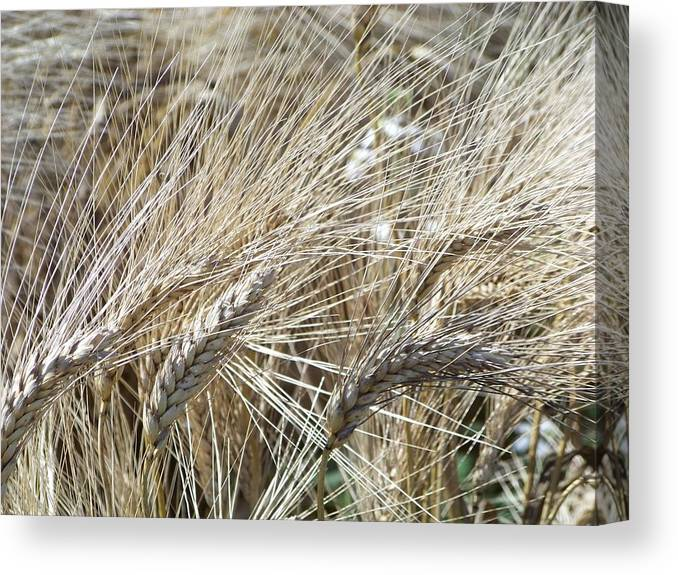 Plants Canvas Print featuring the photograph Whispering Wheat by T Nuernberg-Benesh