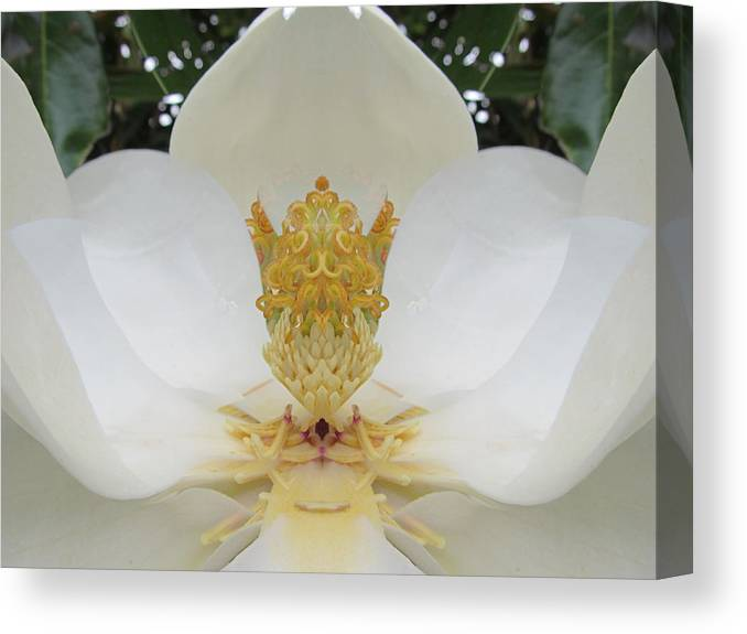 Magnolia Canvas Print featuring the photograph Mystery by Michele Caporaso
