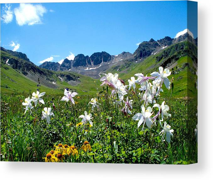 Columbines Canvas Print featuring the photograph American Basin Columbines by FeVa Fotos