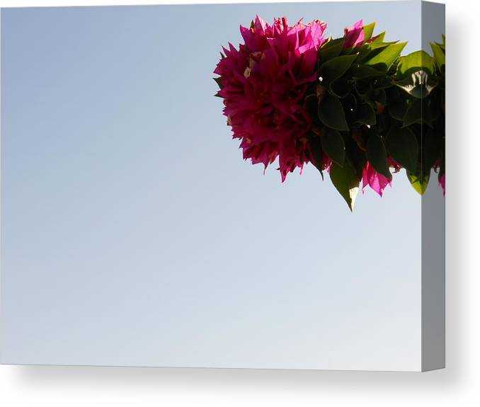 Bloom Canvas Print featuring the photograph Arizona In Bloom by Jessica Smith