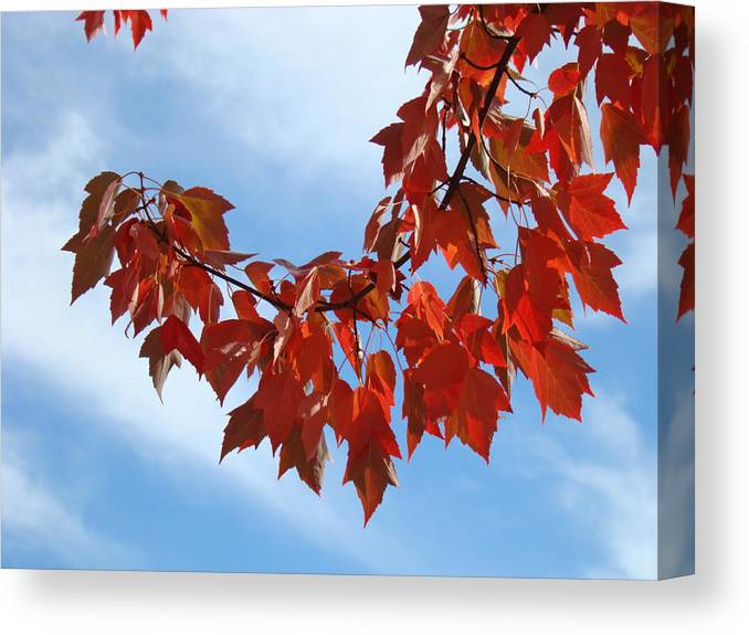 Autumn Canvas Print featuring the photograph Autumn Leaves Tree Red Orange Art Prints Blue Sky White Clouds by Baslee Troutman