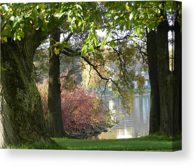 Landscape Canvas Print featuring the photograph Between The Trees by Dennis Leatherman