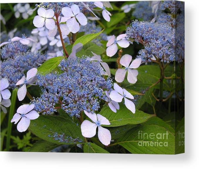 Blue Canvas Print featuring the photograph Blue by Diane Greco-Lesser