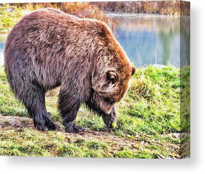 Bear Canvas Print featuring the painting Brown Bear 201 by Dean Wittle