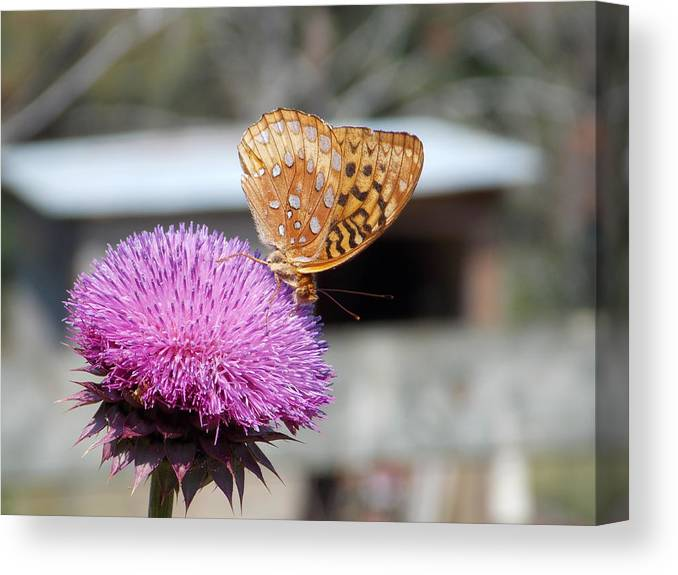 Butterfly Canvas Print featuring the photograph Butterfly by Jaymie Pierce