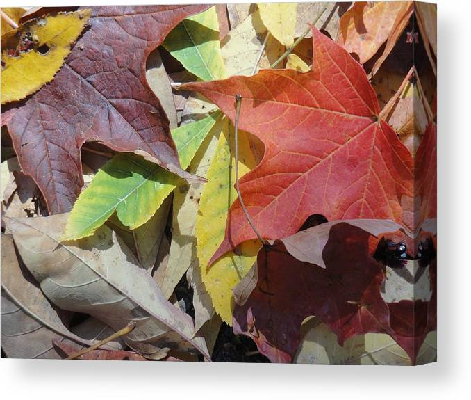 Colors Canvas Print featuring the photograph Colorful Fall Leaves by Kathy Lyon-Smith