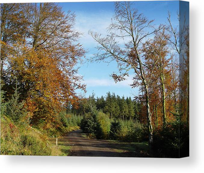 Leaves Countryside Dartmoor Uk Forest Wood Trees Golden Green Autumn Gold Copper Leaves Firs Fir Pines Canvas Print featuring the photograph Copper Leaves by Lloyd Burchell