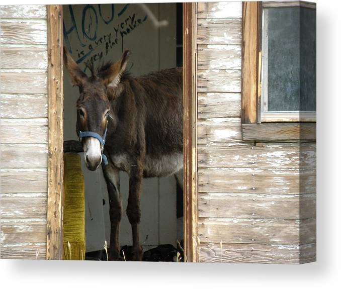 Donkey Canvas Print featuring the photograph Fine House by FeVa Fotos
